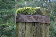 Moss-covered Stock Image
