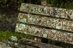 Moss Covered Park Bench Detail. The back of an old park bench covered in different mosses and lichens Royalty Free Stock Photography