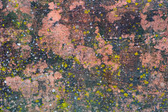 Moss Covered Plastered Wall Images libres de droits
