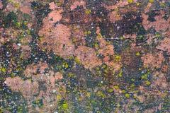 Moss Covered Plastered Wall royaltyfria bilder