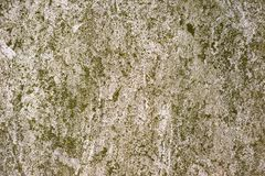 Moss Covered Plastered Wall Stock Photography