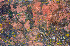 Moss Covered Plastered Wall Royalty Free Stock Photos