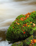 Moss covered rock. A boulder in a fast flowing river covered with bright green moss, and a few autumnal leaves. A slow shutter speed gives the water its smoooth Royalty Free Stock Photography