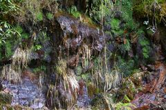 Moss Covered Rock. Wet rock with mosses and grasses growing over stock photo