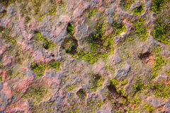 moss covered rock background and texture Stock Photography