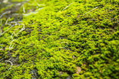moss covered rock background and texture Royalty Free Stock Image