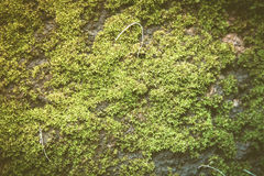 moss covered rock background and texture vintage fillter Stock Photos
