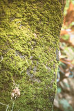 moss covered rock background and texture vintage fillter Royalty Free Stock Image