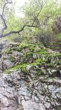 Moss Covered Rock Canyon Outcrop arkivfoton