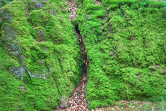 Moss covered rock Stock Photos