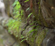 A moss-covered rock in a temple. A close-up shot of moss and lichen covering the walls of a temple in Cambodia Stock Photos