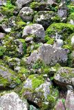 Moss covered rock wall Royalty Free Stock Photos