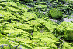 Moss covered rocks 2 Royalty Free Stock Image