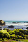 Moss covered rocks. Green moss covered rocks at the ocean Stock Photography