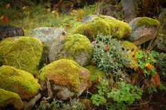 Moss covered rocks Stock Photo