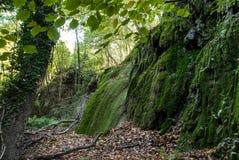 Moss covered rocks Stock Photo