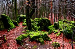 Moss-covered rocks stock photos