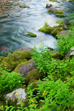 Moss Covered Rocks Along Rushing Stream Stock Images