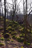 Moss covered rocks in forest Stock Photo