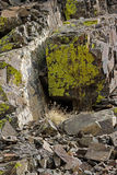 Moss covered rocks Royalty Free Stock Image