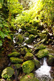 Moss Covered Rocks in a Jungel Stream Royalty Free Stock Images