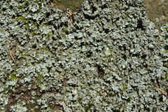 Moss covered rocks macro stock photos