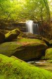 Moss-covered rocks near wallter fall. Stock Photo