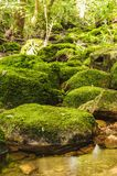 Moss covered rocks near waterfall in green wild tropical. Royalty Free Stock Photography