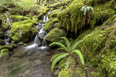 Moss covered rocks in rain forest. Stock Photography
