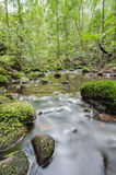 Moss covered rocks in river Royalty Free Stock Images