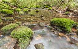 Moss covered rocks in river Royalty Free Stock Photography