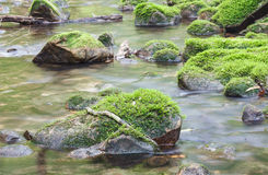 Moss covered rocks in river Royalty Free Stock Photo