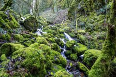 Iconic Moss covered rocks at stream in Oregon, Columbia River Gorge popular with tourists royalty free stock photos