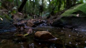 Clover Hill Trail Macquarie Pass. Moss covered rocks and stream of water with a creekside rock and water bubbles on Clover Hill Trail in Macquarie Pass National stock image