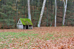Moss covered roof and fall leaves covered field on a farm. In autumn colors Stock Photos