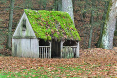 Moss covered roof and fall leaves covered field on a farm Stock Image