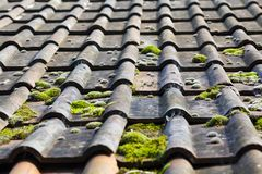 Moss covered roof tiles on a barn. Royalty Free Stock Photos