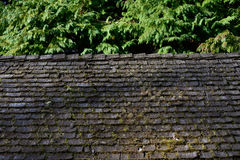 Moss covered shingle roof Stock Images