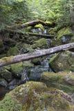 Moss Covered Spring im Adirondacks Stockbilder