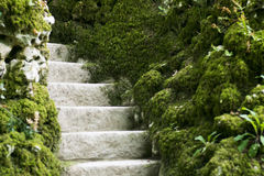 Moss covered stairs in the forest in portugal. Moss covered stairs in the forest, portugal Royalty Free Stock Images