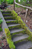 Moss covered stairs in garden Stock Photos