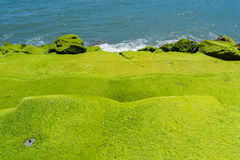Moss covered stairs to ocean Royalty Free Stock Photos