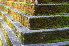 Moss-covered steps. Close up of mossy concrete steps Royalty Free Stock Image