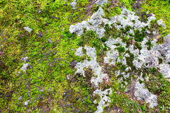 Moss Covered Stone Background Royalty Free Stock Photo