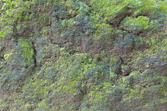 Moss-covered stone Royalty Free Stock Image