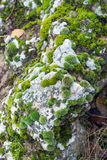 Moss-covered stone Stock Image