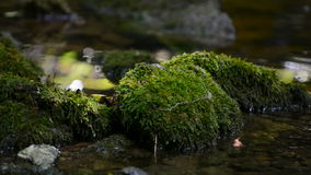 Moss covered stone in shallow water in a stream Royalty Free Stock Photography