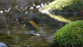 Moss covered stone in shallow water in a stream Stock Photography