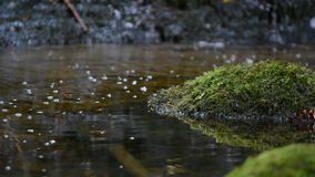 Moss covered stone in shallow water in a stream Royalty Free Stock Image