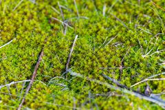 Moss-covered stone. Texture nature background stock photos